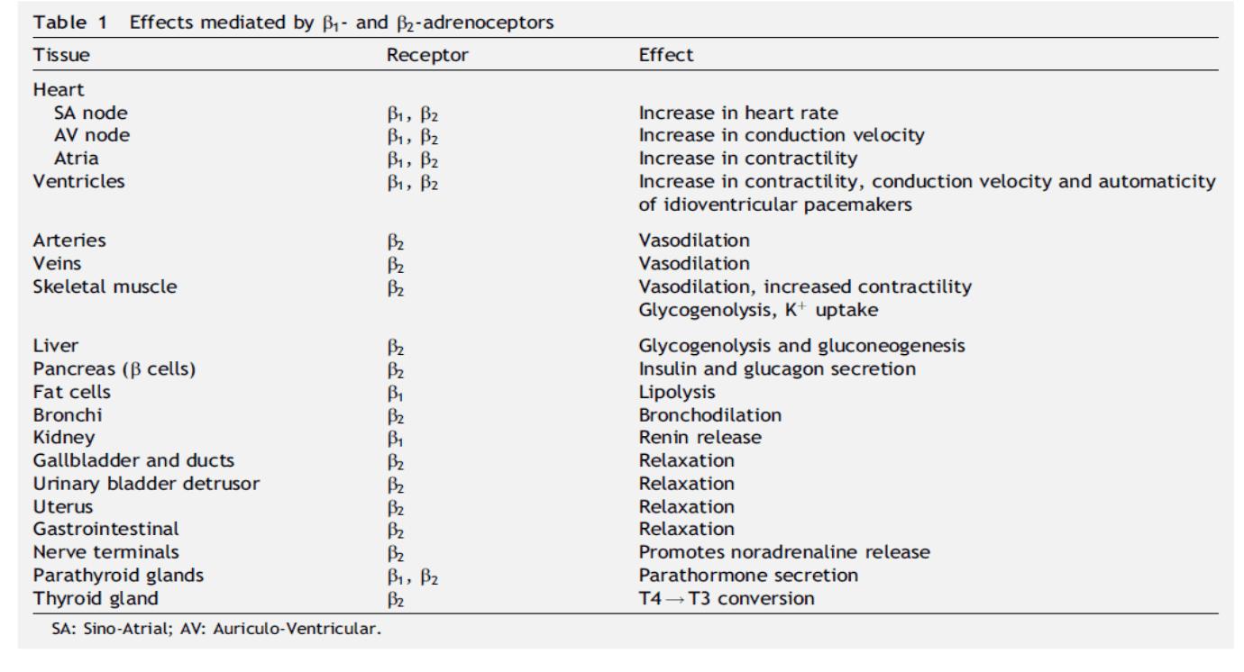 hipertenzija, beta-blokatore crni ribiz s hipertenzijom