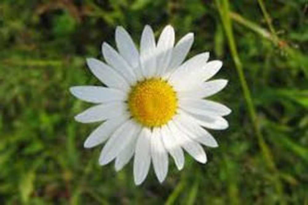 za liječenje hipertenzije daisy