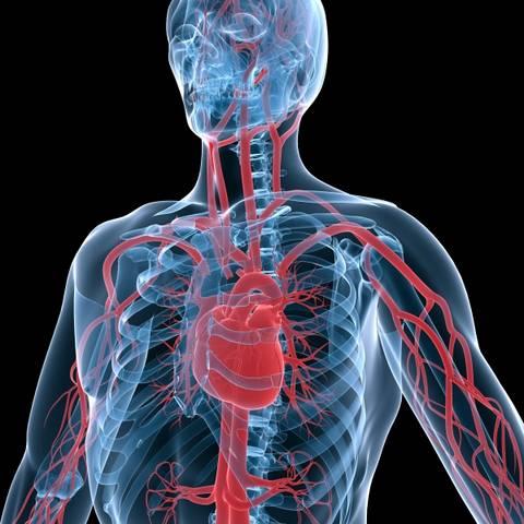 Arterijska stenoza i hipertenzija ,skleroza cerebralnih žila s hipertenzijom