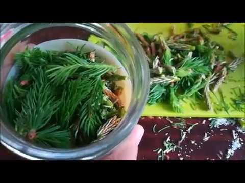 Recept za hipertenziju 2 žlice borove iglice 2 žlice divlje ruže.2, hipertenzija u Zhikarentsev
