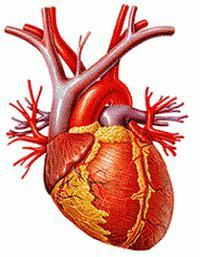 stupanj 3 hipertenzija invalidnost