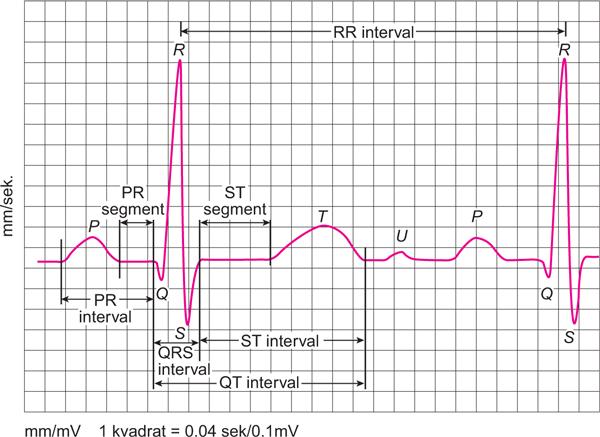 ekg čitanja u hipertenzije lijek hipertenzija cijena valsartan
