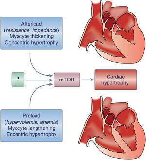 sputum hipertenzije