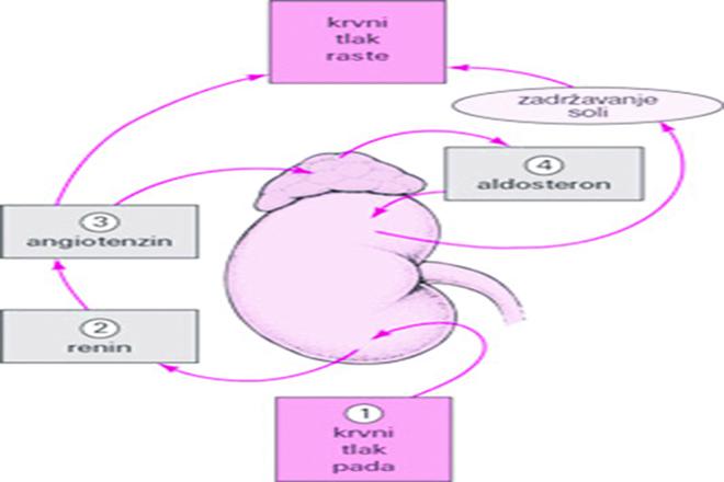 liječenje hipertenzije simptoma simptoma da li akupunktura je koristan u hipertenzije
