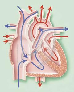 hipertenzija pospanost