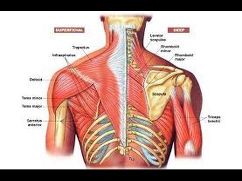 bol u donjem dijelu leđa i hipertenzija forum